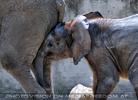 Elefanten Familie 6