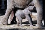 Elefanten Herde 04