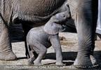 Elefanten Herde 05