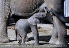 Elefanten Herde 06