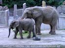 Elefanten Herde 1