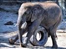 Elefanten Herde 17