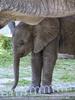 Elefanten Herde 2
