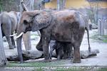 Elefanten Herde 3