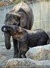 Elefanten kuscheln