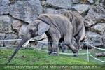 Elefanten Sport