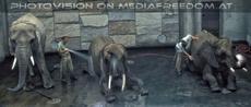 Elefanten Waschstrasse