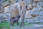 Elefantenbaby 13
