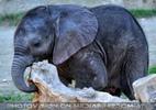 Elefantenbaby 5