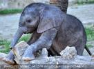 Elefantenbaby 6
