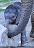 Elefantenbaby 9