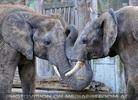 Elefantenfamilie 02