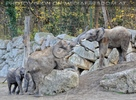Elefantenfamilie 03