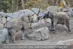 Elefantenfamilie 05