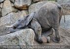 Elefantenfamilie 06