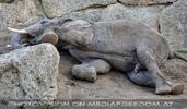 Elefantenfamilie 07
