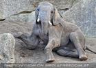Elefantenfamilie 08