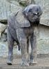 Elefantenfamilie 09