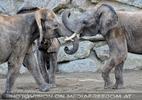 Elefantenfamilie 12