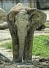 Elefantenjüngling