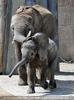 Elefantenkinder beim spielen