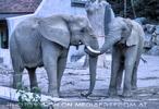Elefantenpaar 2