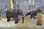 Im Elefantenhaus 2