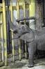 Im Elefantenhaus