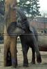 Ausgelassener Elefant