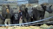Elefantenbar
