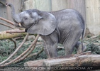 Glückselefantenteenager