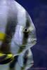 Fisch unbekannter Art