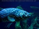 Aquarien 08
