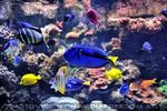 Aquarium 08