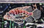 Feuerfisch Vision