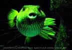 Meeresfisch