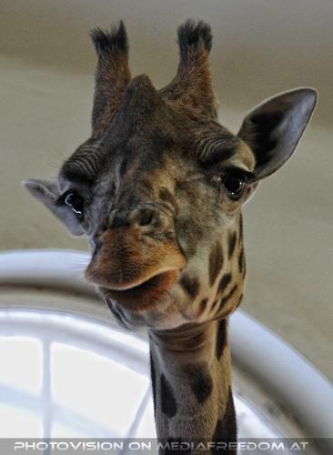Im Giraffenhaus 2