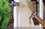 Giraffen Haus