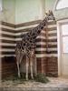 Im Giraffenhaus