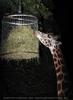 Wildlife and Nightlife - Pix 096