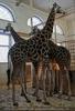 Im Giraffenhaus 1