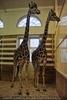 Im Giraffenhaus 4
