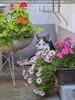 Husky Friend in flowers