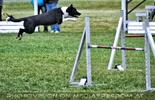 Dog Agility 09