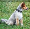 Dog Agility 02