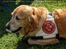 Samariter Hund