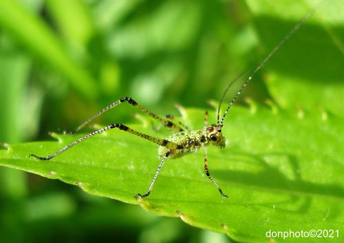 Insektennachwuchs