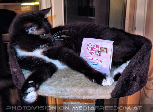 Celebrate Valentine 41: Ebony