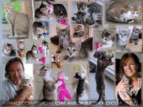 Kittygarten mit Kittygärtner: Eva D., Charly Swoboda
