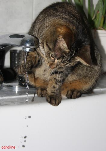 Wasser ist zum Spielen da: Mickey